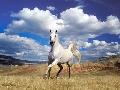 скачать игру про коней - фото 5